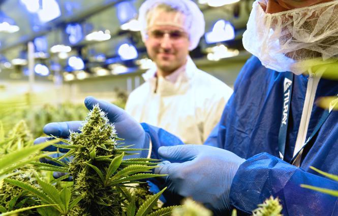 Tilray - Cannabis